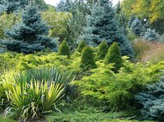 Designing With Conifers: Layers of Texture for Your Garden. Sharp and prickly or fine like ferns, richly textured conifers bring unexpected interest to the landscape.