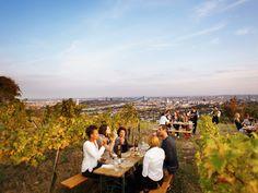 An evening of wine at Heuriger Wieninger Vienna Austria