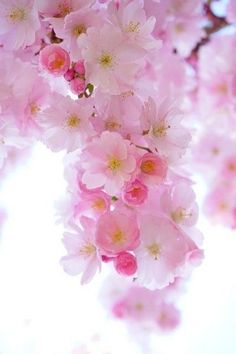 Cherry Blossom Flowers, Peach Blossoms, Tropical Flowers, Garden Guide, Garden Tools, Fall Flowers, Pretty Flowers, Flowering Kale, Fall Clean Up