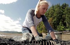 Acidity in the ocean is dissolvin oyster she llsTaylor Oyster Farming