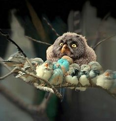 Just give a hoot  #animals