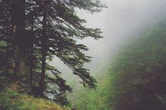 Pasear por los bosques de la #valdaran #vidaverneda #valdaran #igersaran #mountain #mountainlife #mountainlovers #woods #catalunyaexperience #slowlife #senderismo #trekking #pirineu #pirineos
