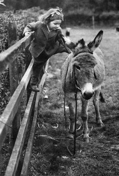 mamitah: videre-licet: ibustmine-tokickyours: Pictures like this make me really happy. Me too :) Inside every big horse girl is a little horse girl with one foot on a fence rail come closer, little donkey… Animals For Kids, Farm Animals, Animals And Pets, Cute Animals, Tanz Poster, Big Horses, Tier Fotos, Horse Girl, Vintage Photographs