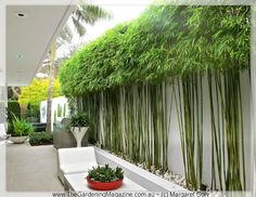 Enjoy your relaxing moment in your backyard, with these remarkable garden screening ideas. Garden screening would make your backyard to be comfortable because you'll get more privacy. Bamboo Landscape, Modern Landscape Design, Garden Landscape Design, Modern Landscaping, Front Yard Landscaping, Landscaping Ideas, Backyard Privacy, Privacy Plants, Garden Privacy