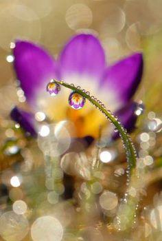 Photos encadrées - Fleurs - ma belle photo