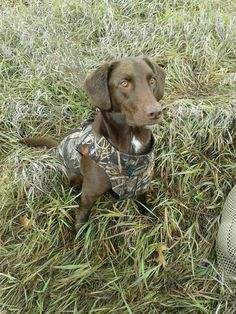 How To Train Dog To Hunt Ducks