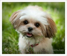Pet Portrait-Pet Photography with Bailey in Raleigh