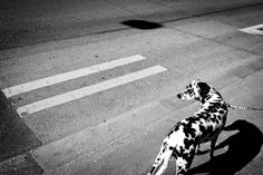 Street photography: geometric elements - Photophique