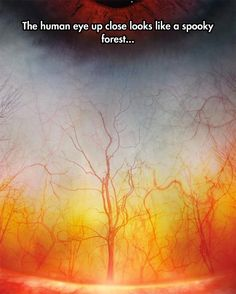 The Forest In The Eye