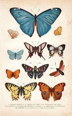 De oruga a mariposas... Aprendiendo ciencia a través de yoga para niños... Abrakadabra...