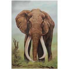 NOVICA Signed Animal Themed Painting of Indian Elephant ($120) ❤ liked on Polyvore featuring home, home decor, wall art, brown, paintings, realist paintings, inspirational paintings, indian home decor, india wall art and elephant home decor