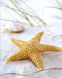 Star fish on white sand . . .