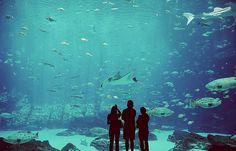 amazing, aquarium, awesome, blue, fishtank