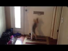 Little Dog Attacks Mail Being Pushed Through Slot Funny Dogs, Funny Animals, Dog Attack, Dog Humor, Little Dogs, Doggies, Slot, Youtube, Little Puppies