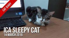 [Cat Diary] : Ica Sleepy Cat