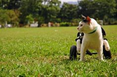 How to Make a Wheelchair for a Cat