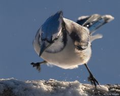 Enough of this snow!!! #birds