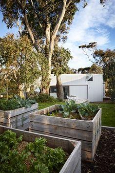 Pergola Attached To House Roof Grand Designs Australia, Bush Garden, Garden Beds, Beach Gardens, Outdoor Gardens, Small Gardens, Dream Garden, Home And Garden, Garden Living