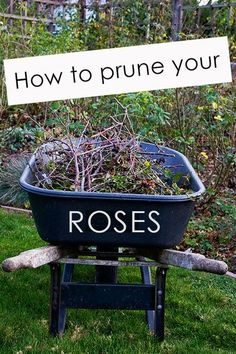 Straightforward advice with tons of great pics! how to plant roses, grow, landscaping with roses, how to prune roses, garden haven, pruning roses, flower, advic, rose prune