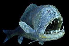 Fangtooth (Anoplogaster cornuta) Deep Sea Creatures, Weird Creatures, Amazing Animals, Monster Fishing, Deep Sea Fishing, Deep Blue Sea, Mundo Animal, Underwater World, Fish Art