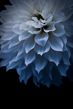 The Painted Bench - Blue Dahlia