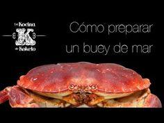 Cómo preparar un Buey de Mar. Video #recetas de #platos @J Oão Inácio victorómicos elaborados por @chefkoketo. Puedes ver esta y otras #recetas en nuestro blog de #gastronomia http://koketo.es o bien siguiendones en twitter @Jorge Martinez Martinez Hdez Alonso. #koketo