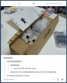 I did not order this box of cat // HOW ARE YOU COMPLAINING LOOK AT ITS FACEEEEEEE // it's literally making the :3 face // I want a box of cat please.