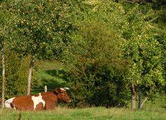 Pays d'Auge: Quintessenz der Normandie