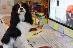 Old Dogs Can Learn New Tricks: You Can Now Pay Online at Cloud Nine!