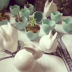 Bunnies and Egg Cups / Seed to Stem Botanicals / Small Container Plantings