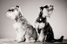Woof! - Photopia Portraits - Studio and location photography by William Debois in Gladstone, Queensland