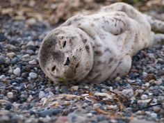 PHOTOS: Seal Pup Seen on North Beach of Burien's Three Tree Point Monday   The B-Town (Burien) Blog