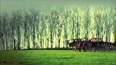 Kölcsei Ferenc teljes himnusz zene - YouTube Vineyard, Youtube, Outdoor, Outdoors, Vine Yard, Vineyard Vines, Outdoor Games, The Great Outdoors, Youtubers