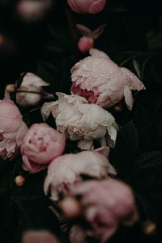 tumblr photo vsco, floral, rainy floral, floral iphone wallpaper, iphone background