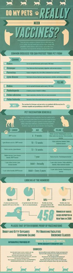 Do My Pets Really Need Vaccines Infographic