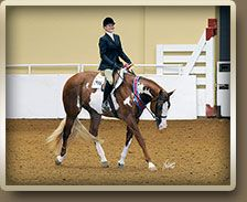 APHA World Champion The Big Sensation. I am really liking this horses babies! Hunter Under Saddle, Western Pleasure Horses, American Quarter Horse, All About Horses, Horse Love, Horse Stuff, Saddles, Equestrian, Champion