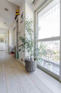 ベランダでも観葉植物を育てている。オリーブのナチュラル感が、ヴィンテージ加工の無垢の床に合う。 Living Spaces, Living Room, Green Flowers, Indoor Plants, Greenery, Loft, Luxury, Interior, House