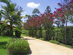 Landscape Design, Garden Design, House Design, Garden Plants, House Plants, Cerca Natural, Hedges, Trees To Plant, Garden Inspiration