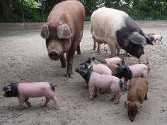 Haus- und Wildtiere der Welt | Zoo Heidelberg