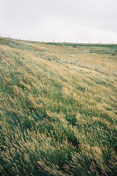 """Geneigte Hügelgräser. From """"Brand's Haide"""", Arno Schmidt: """"warum war kein Wind, der unser Haar mischte?"""""""