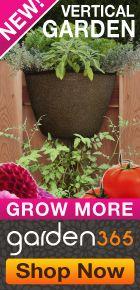 Grainy Porter Mustard - Garden Therapy