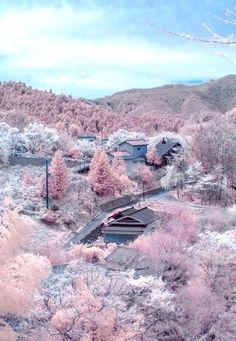 Mount Yoshino, Nara, Japan 満開の桜 奈良県吉野山