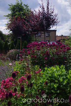 Ogrodowa przygoda Łukasza :) - strona 912 - Forum ogrodnicze - Ogrodowisko