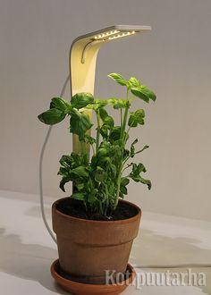 KasVa on kompakti sisäkäyttöön suunniteltu kasvivalo, jonka korkeutta voi kasvattaa. Suunnittelu Samuli Helavuo ja Laura Väre.