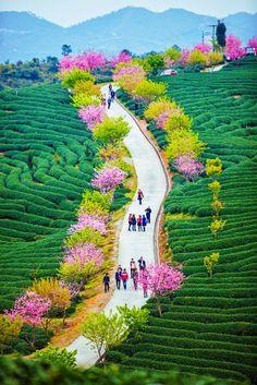 Xi'an,China: Like a Painting..Phenomenal!