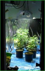 How To Setup An Indoor Marijuana Garden On A Budget