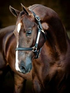Beautiful Thoroughbred