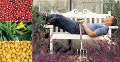 Fruits/Légumes + simples à cultiver : CAROTTES, COURGETTES, FRAMBOISES, EPINARDS, HARICOTS VERTS, LAITUE, PETITS POIS, RADIS, POMMES DE TERRE, TOMATES