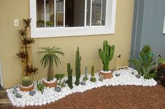 When you have identified your cactus type, you have to create the most suitable atmosphere for it. An assortment of cactus house plants appear good together. There are several different kinds of cactus combo bonsai plants. Small Gardens, Outdoor Gardens, Gravel Garden, Small Garden Design, Front Yard Landscaping, Landscaping Ideas, Patio Ideas, Succulents Garden, Garden Projects