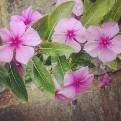 Flores em Três Rios - Brasil